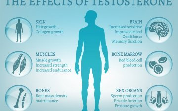 Men's Health and Testosterone – Experts on Call